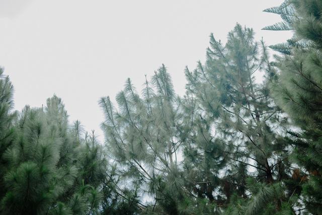 Beverly View Events Pavilion Wedding, BukoolFilms Wedding Videos, Cebu Wedding Photographer Videographer, The DIY Mom Events Cebu, Dennis and Jazzie Wedding, Joseph Agbay Makeup Artist, Padgett's Place Lahug Wedding, Portraits by Bukool, Skye Weddings and Events Coordinator, St. Jude Thaddeus Parish Wedding, Tom Candy, Sandra's Garden Prenup